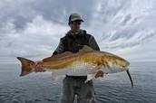 Huge Redfish