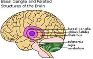 The Average Brain