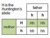 Huntington punnet square