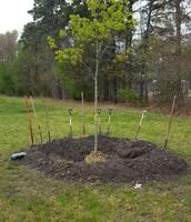 Arbor Day Celebration!