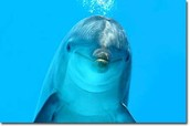 Dolphins are peaceful