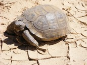 And this is a tortise