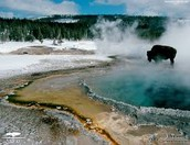 Gorgeous Geysers at Yellowstone