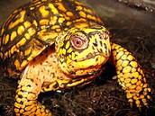 world turtle day??