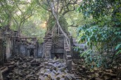 Jungle de Cambodge