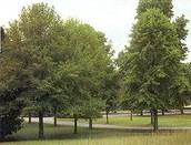 Say Trees!