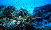An ocean reserve