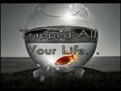 I am traped!!!!!!!!!!!!!!!!!!!!!!!!