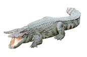 How is the Krokodil taken into the body