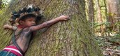 Solutions to the Deforestation- http://www.mnn.com/family/family-activities/blogs/5-ways-to-stop-deforestation