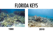 IN 1980 coral reef was beatiful as angle.After only 30 years later it gone .