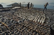 Thousands of sharks are finned each day