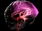 The Brain during Deja Vu