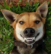 clínicas dentales para mascotas