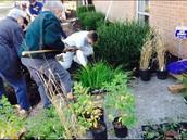 Citizens planting plants