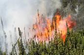 Start of the Alberta Fire