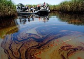 Oil Spills Off Coasts Will Reach Estuaries and Almost Completely Destroy Them