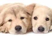 התנדבות בצער בעלי חיים