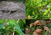 Chameleon Conversation and Adaptations