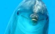 Adorable Dolphin!