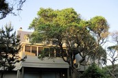 Pelican House is beach-front, tucked into the live-oaks