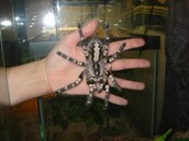 Large Spider and Other Information