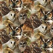 Owls of Wonder