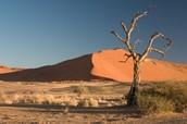 old desert