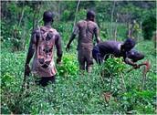 TIA in Slavery