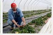 5th job Agriculture Technicians.