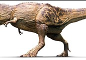 Share three facts about a tyrannosaurus Rexurus?