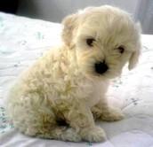 Este perrito esta en adopciòn