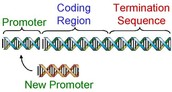 Gene Design