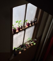 2B's Plants