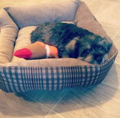 Laying in his bed with his toy!