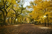 New York Fall