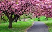 Le printemps (spring)