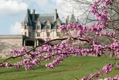 Biltmore Estate ~ Asheville, NC