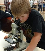 Looking through microscopes