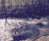 Charlie and henry in the creek
