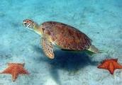 Turtles are native Australian reptiles.