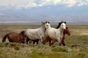 Horses look