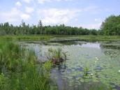 A nice sunny wetland   : - )