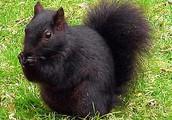 Little squirrel Bobby..