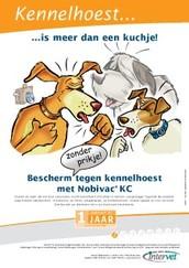 Wat te doen als je hond kennelhoest heeft ?