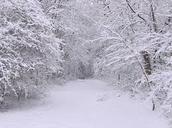 Snowy Woods...