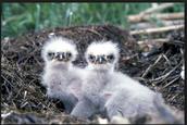 Baby Birdies!