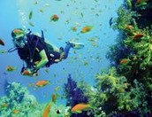 go scuba diving!!!!