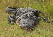 Agenda for Everglades