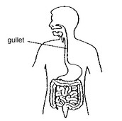 This is a gullet